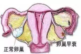 月经与卵巢有什么关系?
