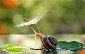 美导:我们像蜗牛一样,把家背在身上。