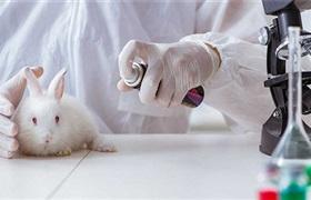 联合利华停止化妆品动物试验 从旗下品牌多芬开始