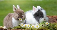 雅诗兰黛力挺 #BeCrueltyFree 活动 望废除化妆品动物测试