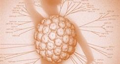 女性私密护理品牌毓美人具有清除HPV病毒的功效